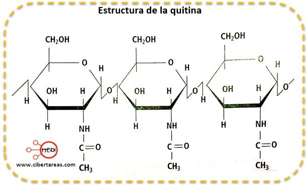 Quitina – Temas Selectos de Química 2 1
