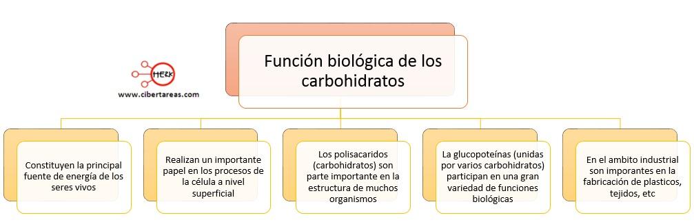 Función biológica de los carbohidratos – Temas Selectos de Química 2 0