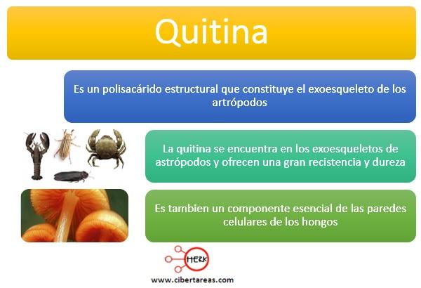 Quitina – Temas Selectos de Química 2 0