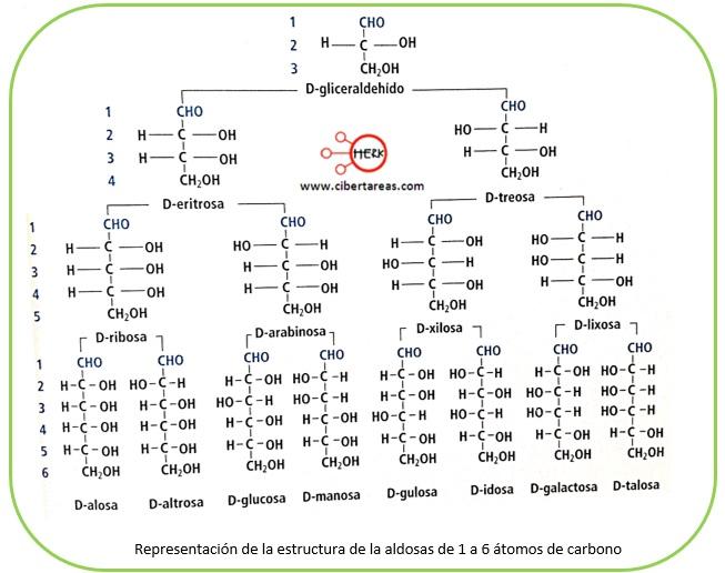 Estructura de los carbohidratos – Temas Selectos de Química 2 6