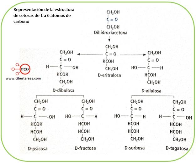 Estructura de los carbohidratos – Temas Selectos de Química 2 7