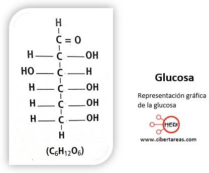 Estructura de los carbohidratos – Temas Selectos de Química 2 1