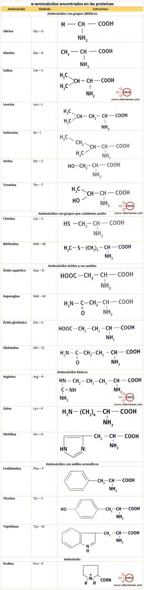 Estructura de las proteínas – Temas Selectos de Química 2 4