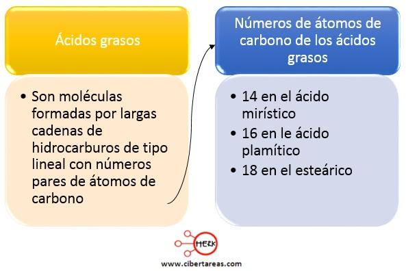 Ácidos grasos – Temas Selectos de Química 2 0