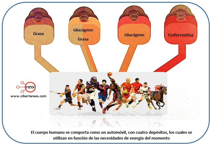 Metabolismo de los carbohidratos – Temas Selectos de Química 2 1