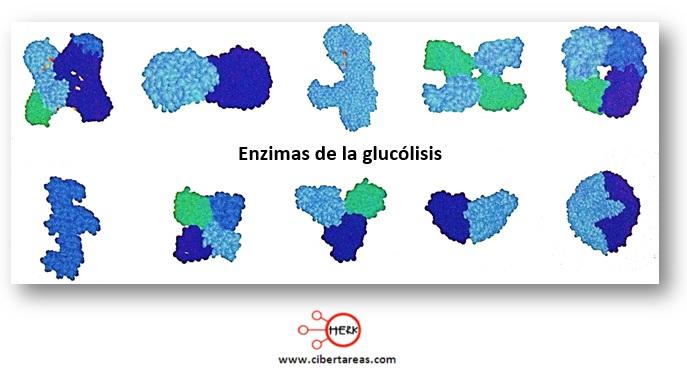 Glucólisis – Temas Selectos de Química 2 1