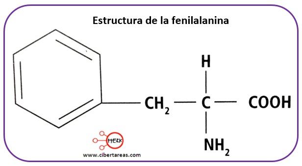 Estructura de las proteínas – Temas Selectos de Química 2 3