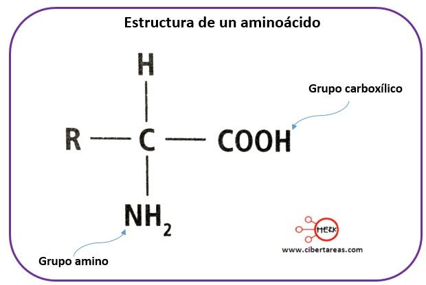 Estructura de las proteínas – Temas Selectos de Química 2 1