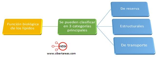 Función biológica de los lípidos – Temas Selectos de Química 2 0