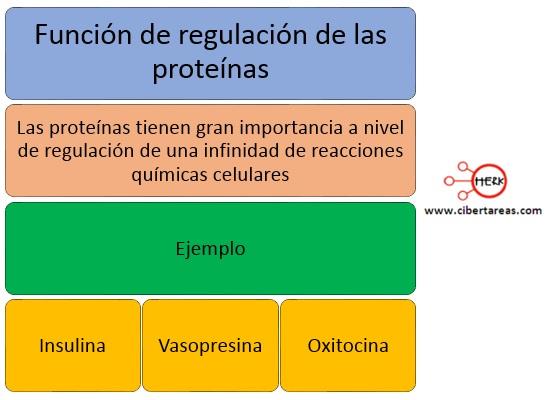 Función de regulación de las proteínas – Temas Selectos de Química 2 0
