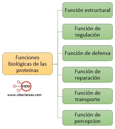 Función biológica de las proteínas – Temas Selectos de Química 2 0