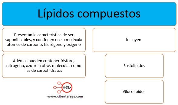 Lípidos complejos – Temas Selectos de Química 2 0