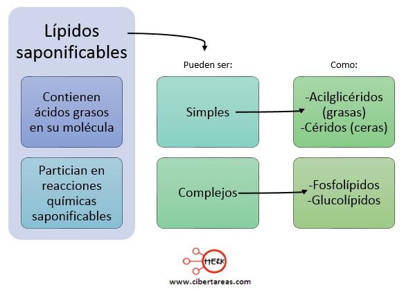 Lípidos saponificables – Temas Selectos de Química 2 0