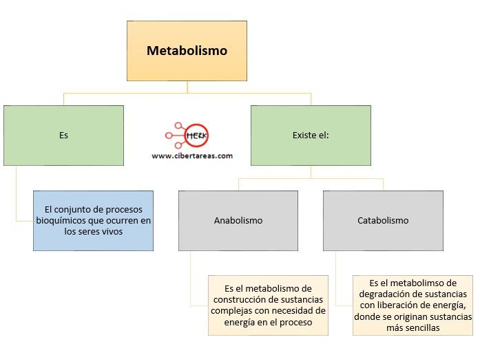 Metabolismo de los carbohidratos – Temas Selectos de Química 2 0