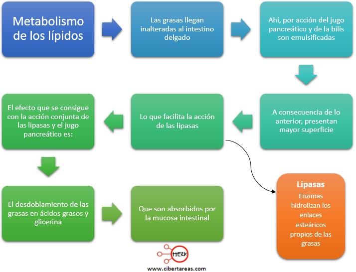 Metabolismo de los lípidos – Temas Selectos de Química 2 0
