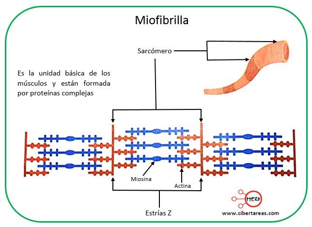 Función estructural de las proteínas – Temas Selectos de Química 2 0