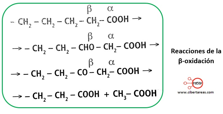 Metabolismo de los lípidos – Temas Selectos de Química 2 2