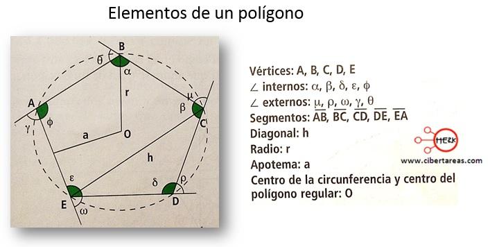 Elementos de los polígonos: radio, apotema y diagonal – Matemáticas 2 0