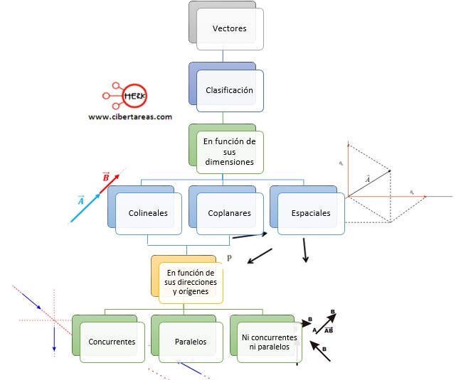 clasificacion de los vectores mapa conceptual
