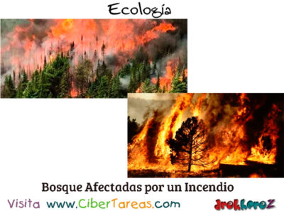La Sucesión Ecológica – Ecología 2