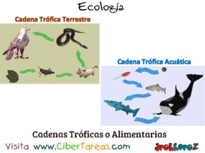 Cadenas Tróficas o Cadenas Alimentarias – Ecología 0