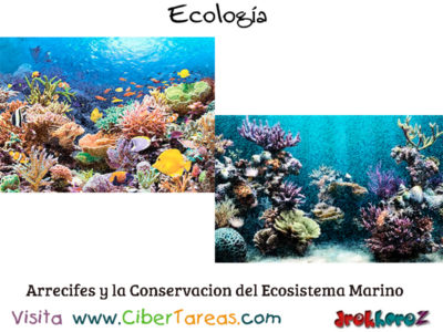 La conservación de los Ecosistemas Marinos – Ecología 0