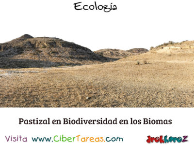 Pastizal en Biodiversidad en los Biomas – Ecología 0