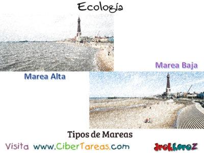 Mareas en los Fenómenos Naturales en la Biósfera – Ecología 0